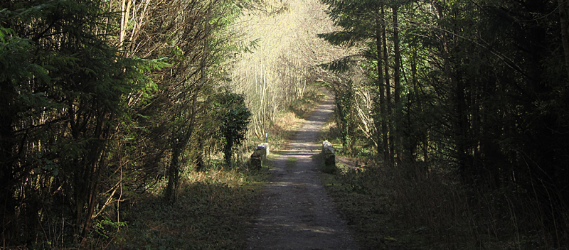 Dunmore Wood, Durrow